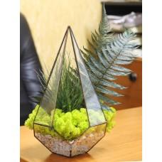 Флорариум пирамида с мхом и декоративными растениями