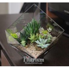 Флорариум куб с суккулентами