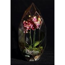 """Флорариум """"Кристалл с орхидеей"""""""