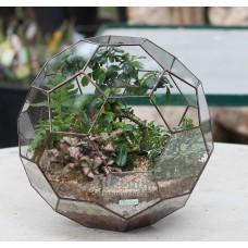 Флорариум мяч с бонсай
