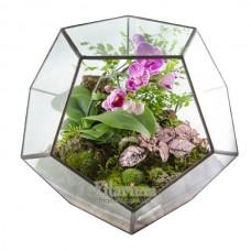 Флорариум додекаэдр с орхидеей