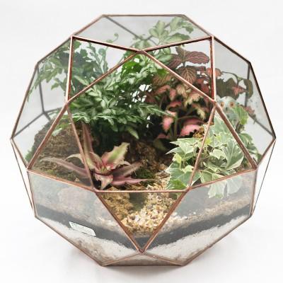 Флорариум глобус тропики