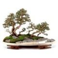 Ландшафт в миниатюре (Пенджинг)